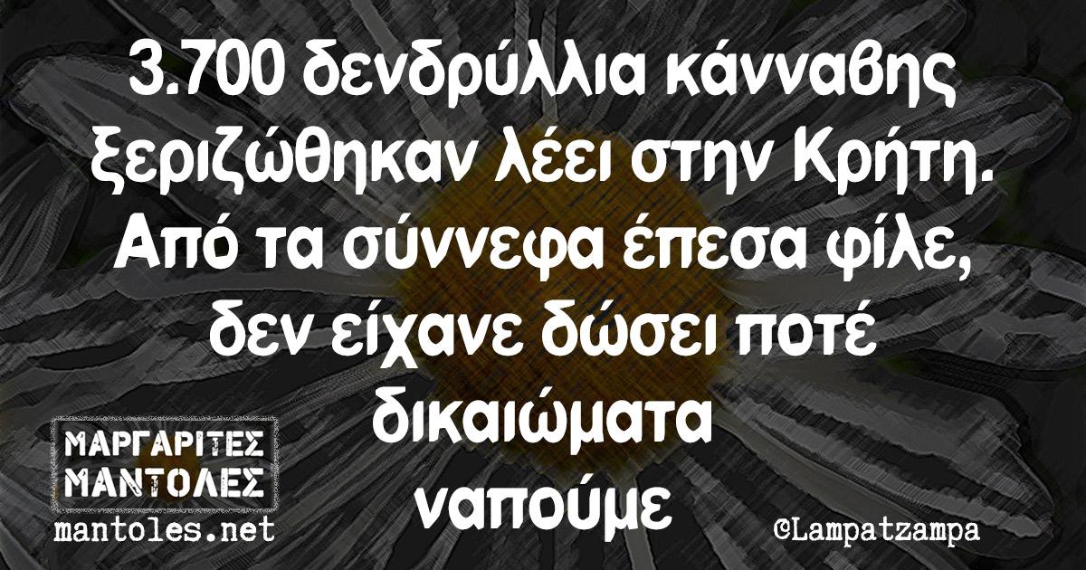 3.700 δενδρύλλια κάνναβης ξεριζώθηκαν λέει στην Κρήτη. Από τα σύννεφα έπεσα φίλε, δεν είχανε δώσει ποτέ δικαιώματα ναπούμε